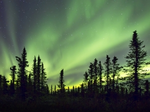 ARCTIC LIGHTS 1